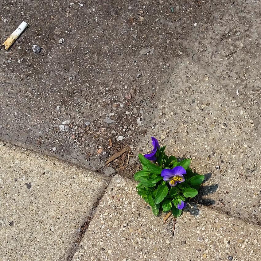 viola and cigarette